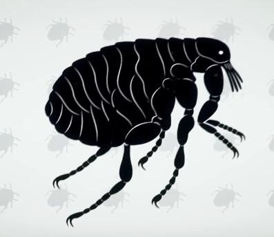 научно популярный фильм паразиты